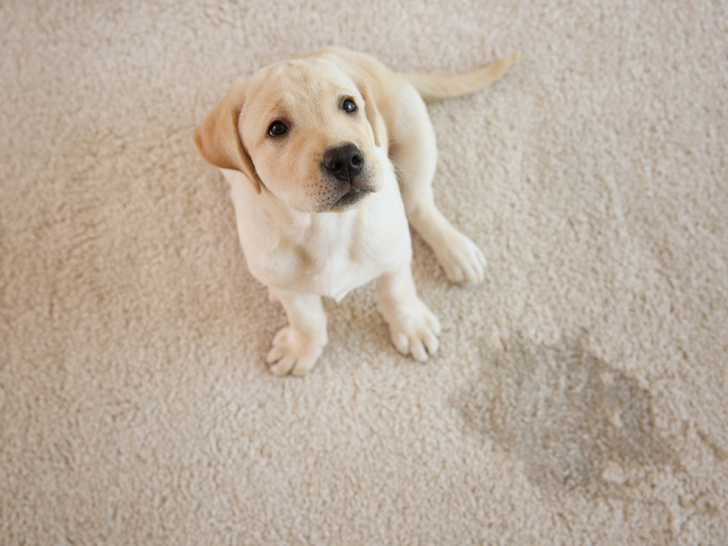 Find a Carpet Cleaning Service in Bossier City, Shreveport & Stonewall, LA